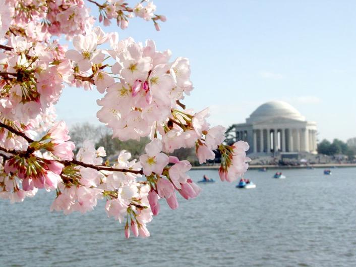 美国首都地区春意盎然 推介春游赏樱胜地