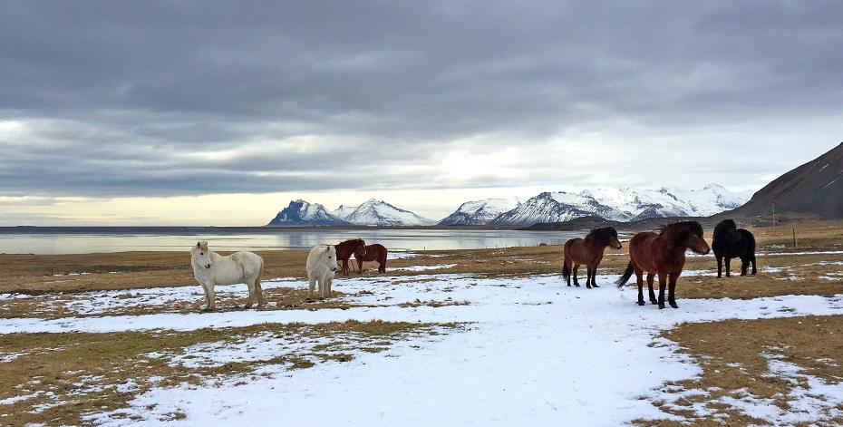 冰岛六善酒店即将动工 预计2022年开业