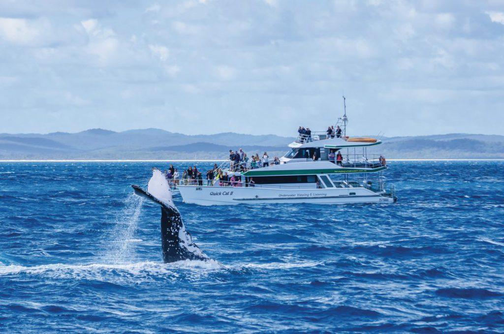澳大利亚昆士兰州荷维湾当选世界首个鲸鱼遗产地